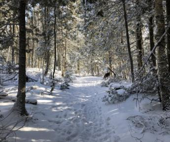Hiking Trail on Bruce Peninsula Winter